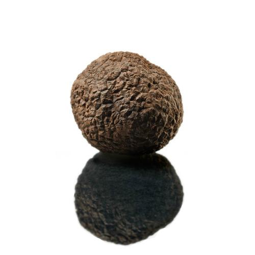 Truffe noire fraîche